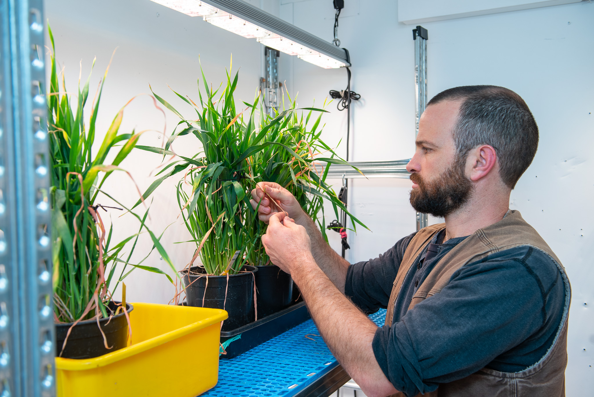 Student in the plant lab